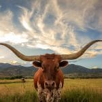 Getting to Know Texas (Dallas, San Antonio, El Paso)